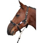 Harry horse nose net