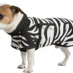 hondenjas zebra fleece